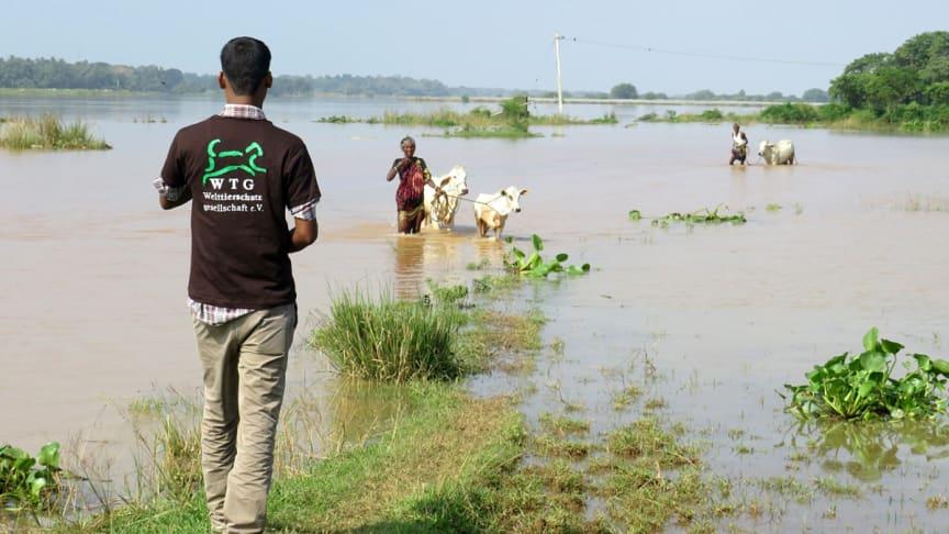 Die Welttierschutzgesellschaft fordert, dass im Katastrophenfall nationale Evakuierungs- und Unterbringungsstrategien für Tiere vorliegen müssen.