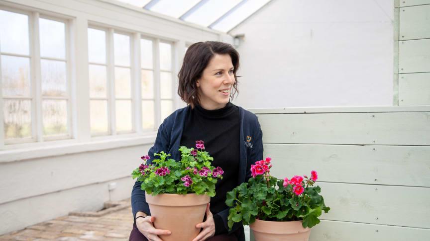 Sara Bratt, Sofieros trädgårdsdesigner och skapare av utställningen Passion för pelargon. Foto: Radek Labunski.