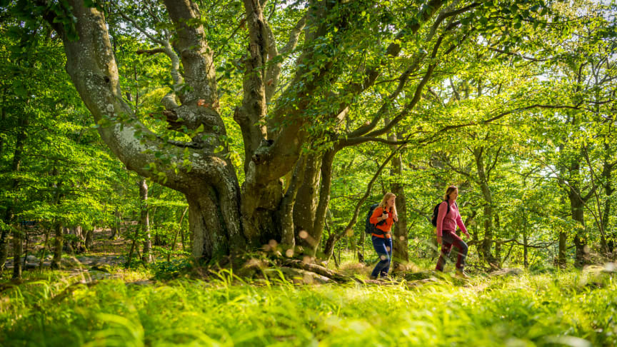 Hela Sverige samlas i ett nationellt ramverk för vandringsturismleder