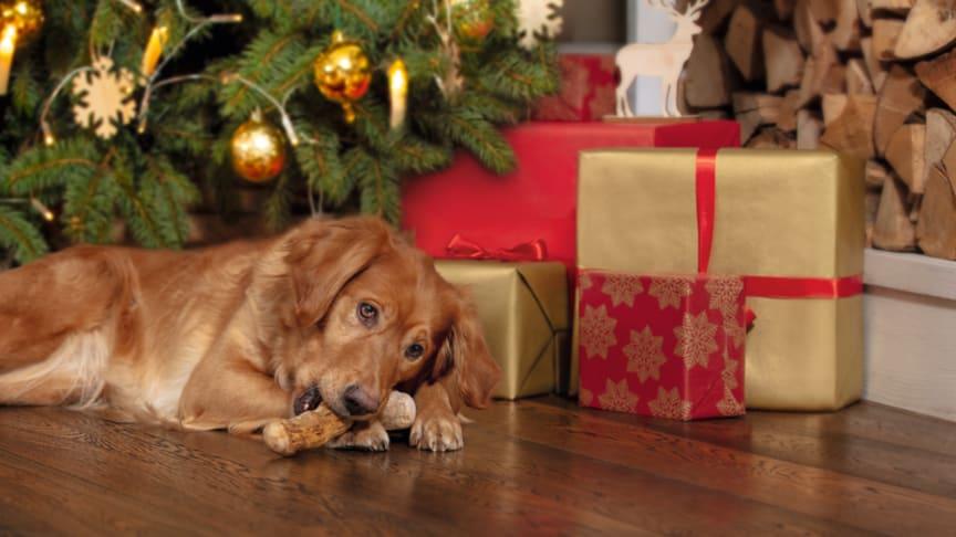 Wir wünschen tierisch entspannte Feiertage