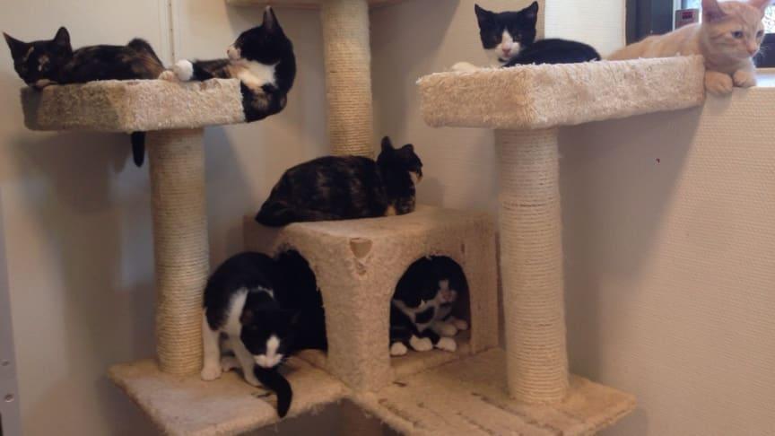 Vi ønsker en lovgivning, der beskytter katten mod forsømmelse og mod overdreven og uhensigtsmæssig avl!