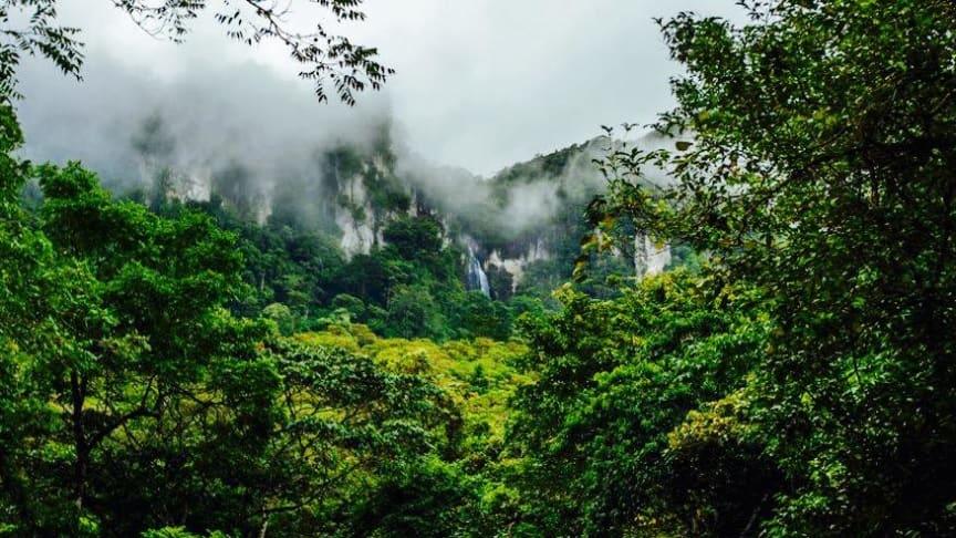 BOSAWA i Nicaragua, der er et biosfærereservatet under UNESCO, er under angreb