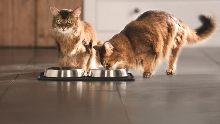 Zwei Katzen am Napf: Wichtig ist die altersgerechte Versorgung