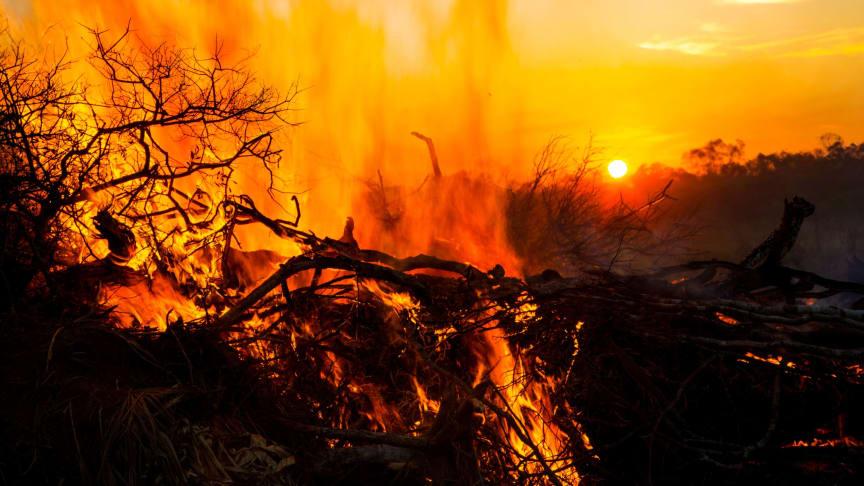 I Bolivia er der per 18. september brændt 4,1 millioner hektarer siden januar 2019. Brandene har særlig hærget i regionen Chiquitania i det østlige Bolivia.