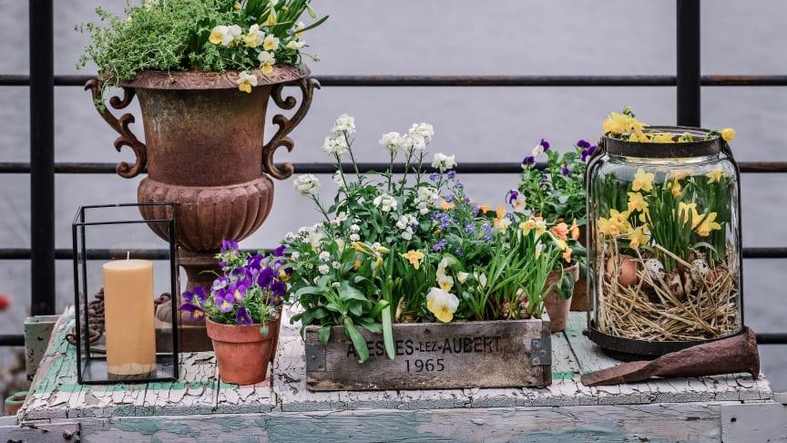 Bli glad av vårens härliga vårblommor! Foto: @atmycasa