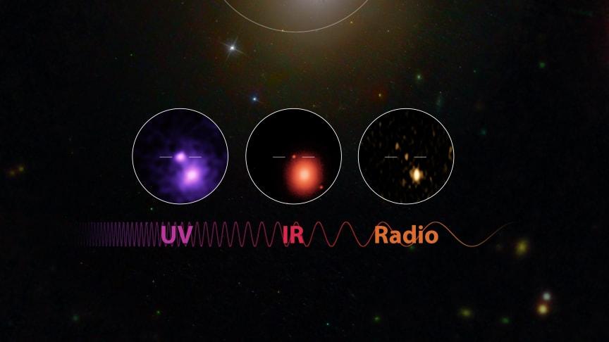 Den elektromagnetiska strålningen från kollisionen syns här som ultraviolett och infrarött ljus och som radiostrålning. Foto: Robert Hurt (Caltech/IPAC), Mansi Kasliwal (Caltech), Gregg Hallinan (Caltech), Phil Evans (NASA), GROWTH collaboration.