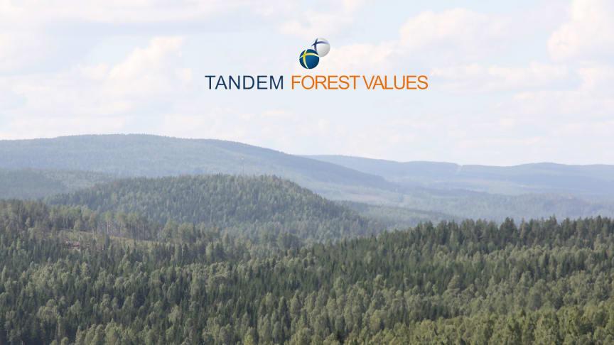 Nio nya skogsforskningsprojekt i Sverige och Finland finansieras via Tandem Forest Values.