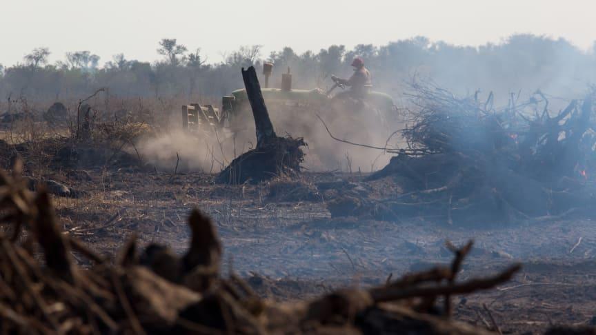 Regnskoven brændes og ryddes i en rasende fart, så blandt andet det danske landbrug kan fodre dyr med soja. Foto: Jim Wickens, Ecostorm via Mighty Earth