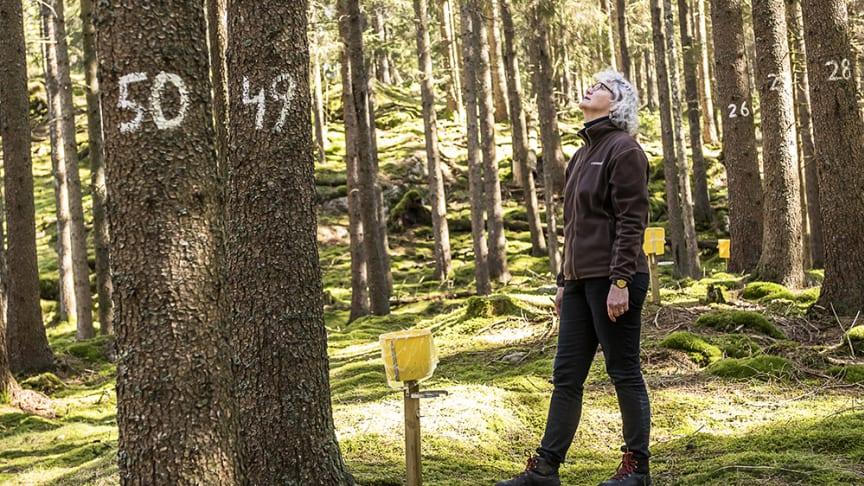 Provtagning Storskogen, Alingsås, Gunilla Pihl-Karlsson