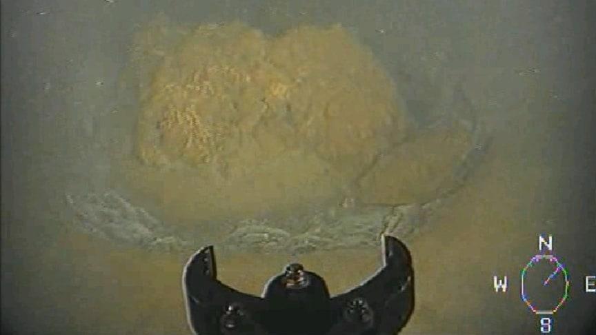 Foto: Sjöfartsverket/Stridsmedel från andra världskriget som ligger väl inbäddat i sediment