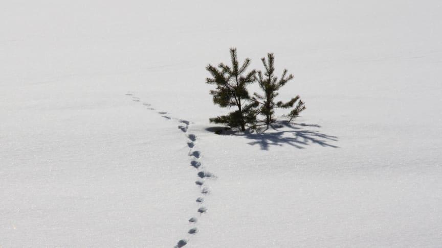 Åtta nya ledamöter har valts in i KSLA:s Skogsavdelning.