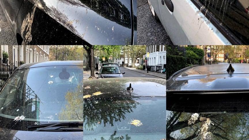 A madarak ürüléke komoly kárt tehet az autó fényezésében