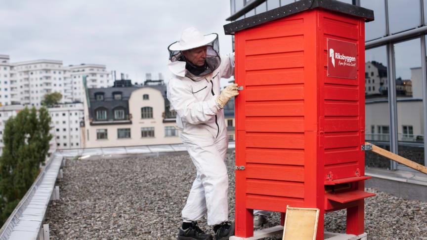 Hyr en bikupa - nyhet bland Riksbyggens enkla miljöidéer