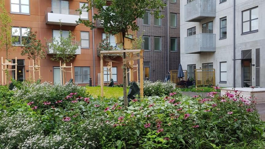 Den prunkande innergården som får omsorg året runt av Einar Mattssons Utemiljö-team.
