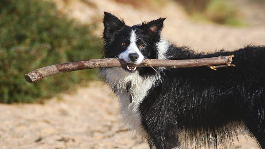 Semester med hund – så reser du hållbart och säkert med hela familjen