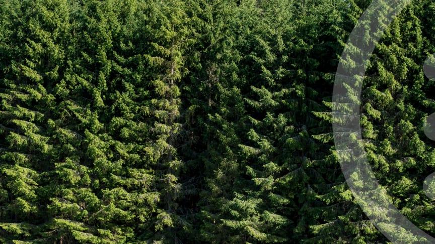 Biometria i samarbete med Academic Work för att digitalisera skogsindustrin.