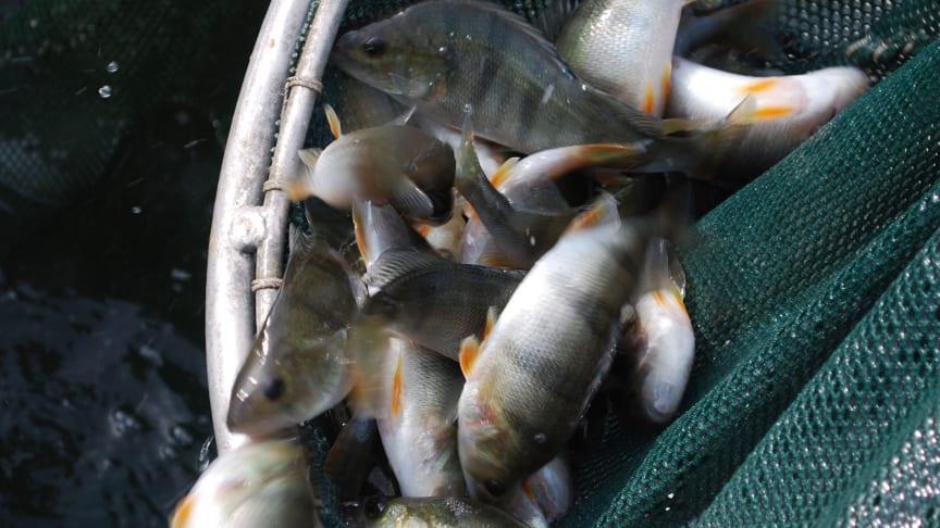 2019-03-21 Sustainable Aquaculture
