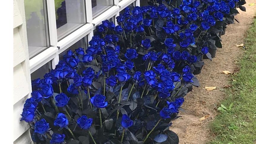 Inför begravningen hade medarbetarna samlat ihop till blå rosor.