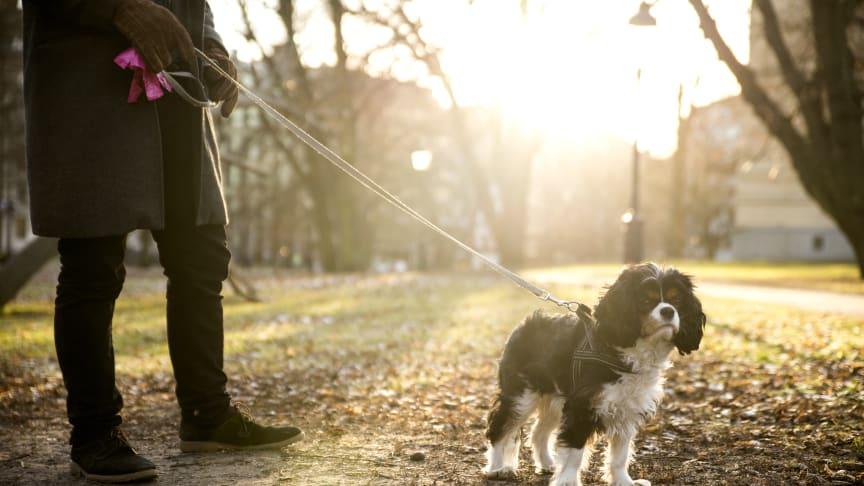 yepstr-hundvakt-DSC_0014