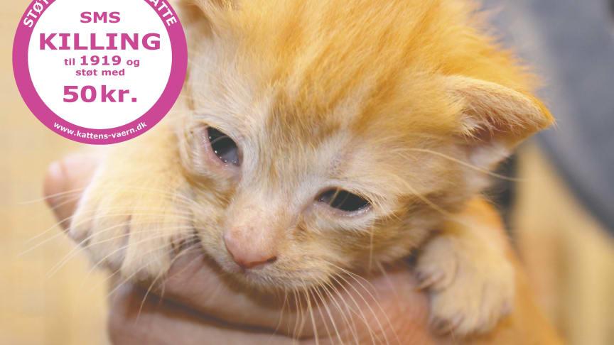 Øjenbetændelse er yderst smertefuldt, og kan, ubehandlet, ødelægge kattens syn permanent. Så hurtig behandling er afgørende!