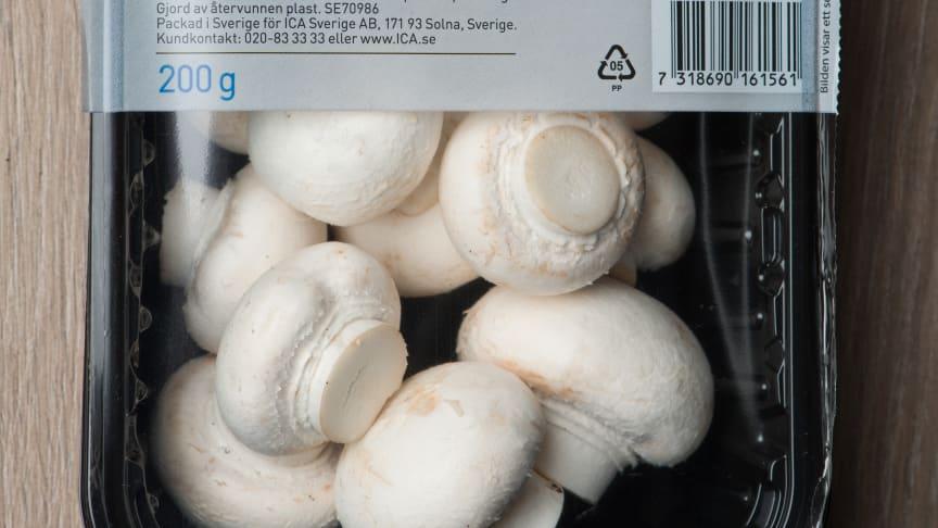 Ekologiska champinjoner