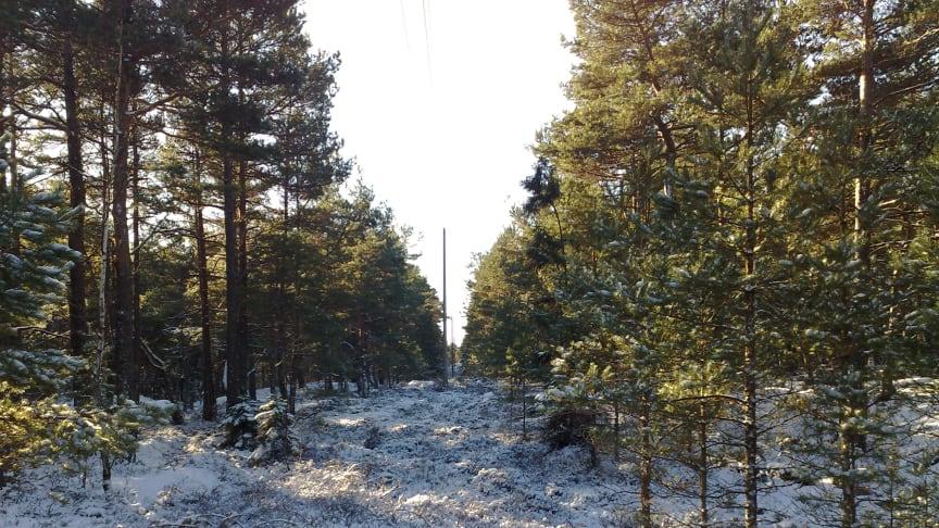 Norgesnett leverer strøm til Hvaler- og Fredrikstad kommune, samt 4 kommuner i Follo-regionen i tillegg til Askøy utenfor Bergen. Selskapet leverer strømforsyningen og er ansvarlig for at nettet fungerer optimalt til enhver tid.