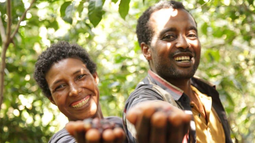 Det nya utvecklingsprojektet når 2 500 småskaliga kaffeodlare i Etiopien.