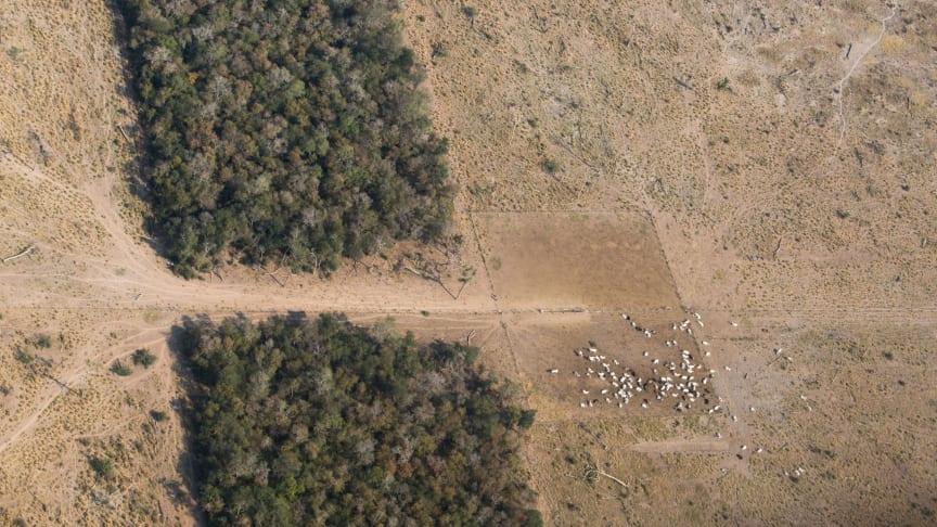 Verdens Skove hilser lovforslaget om stop af import af kød og soja, der har ryddet skovene i Brasilien