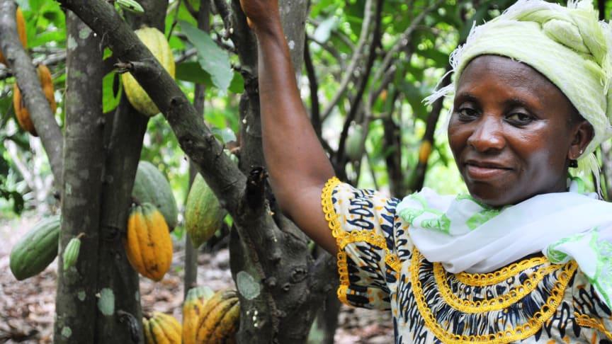 Tackling exploitation in Cocoa Farming - Fairtrade Fortnight