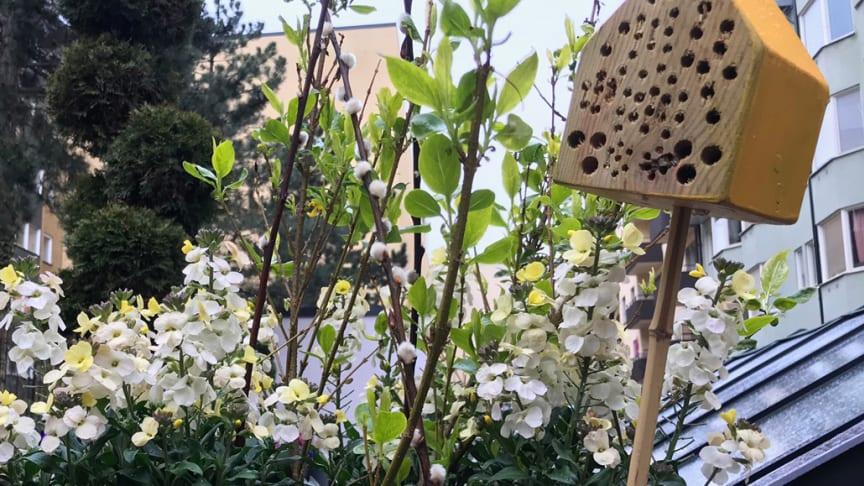 Vi bjuder bin på mat och boende