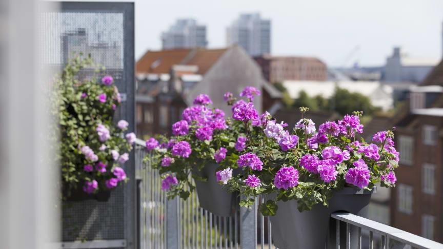 I år kan det vara läge att ställa in sig på en semester på hemmaplan. Balkongen kan omvandlas till en välbehövlig tillflyktsort.