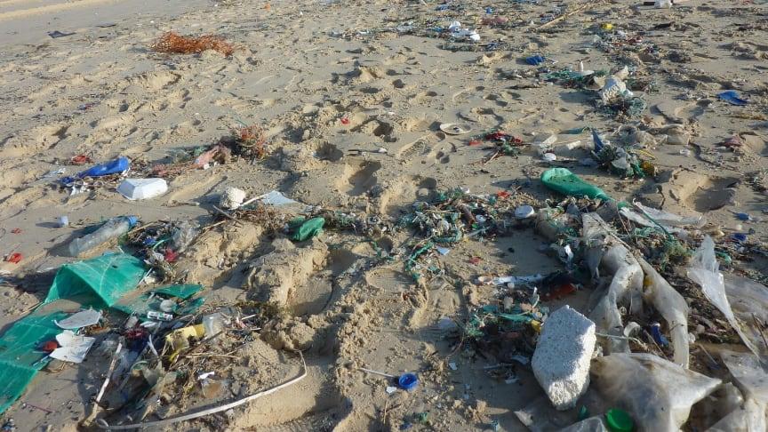 Marin nedskräpning är ett av vår tids största miljöproblem och plast är ett av de vanligaste sortens skräp i haven. FanpLESStic är ett nytt projekt, som ska arbeta med att förebygga och förhindra utsläpp av mikroplaster. Foto: Pixabay
