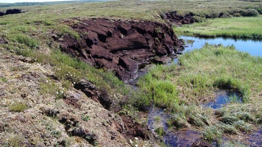 Tinande permafrost och markkollaps i Ryssland. Foto: Gustaf Hugelius