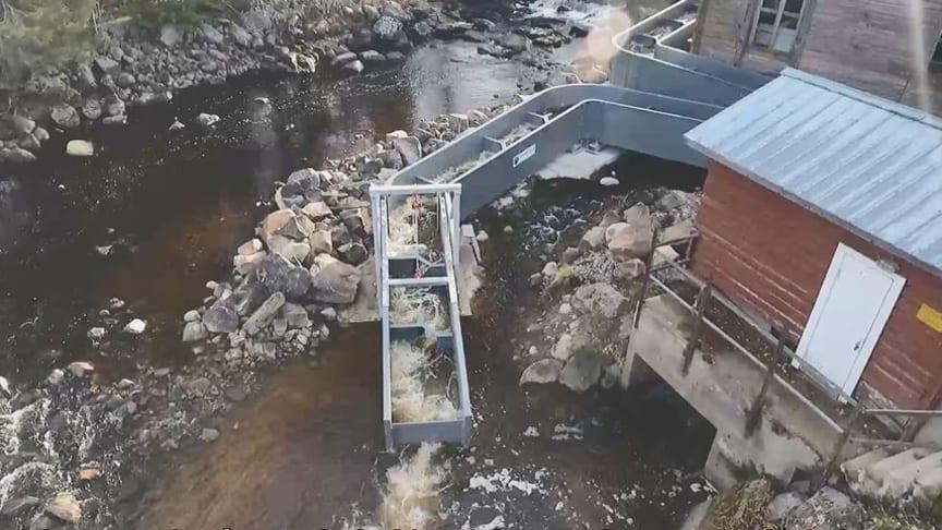 Ny uppfinning med flexibel fisktrappa i Storforsen