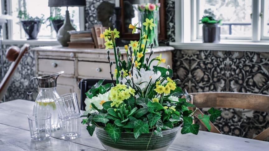 Blommor i nyanser av gult ger härlig påskstämning. Foto: Åsa Myrberg