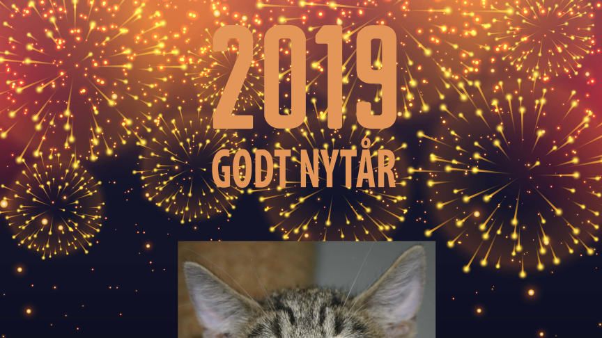 Godt nytår fra Kattens Værn - Vi glæder os til at redde flere katte i 2019!
