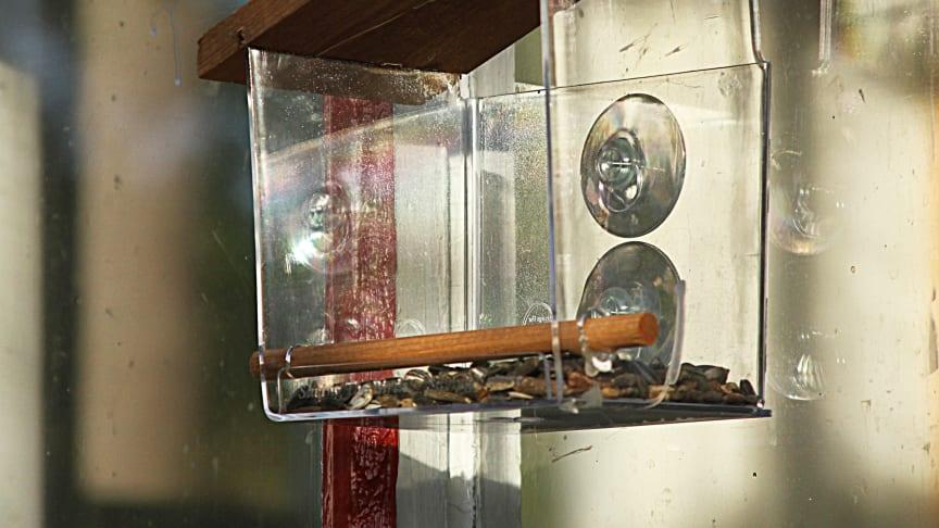 Fönstermatare för fåglar