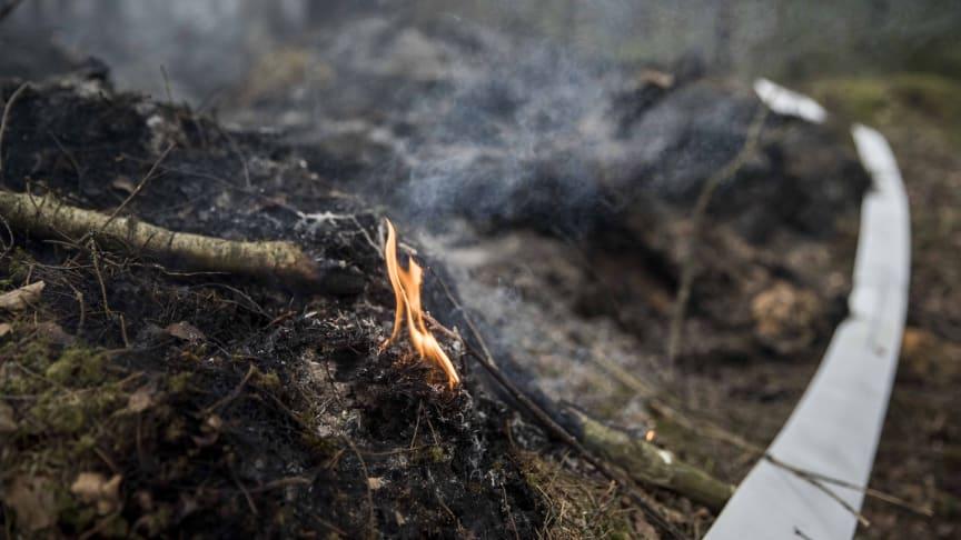 Det närmaste dagarna är det stor brandrisk i Götaland och stora delar av Svealand. Foto: Pavel Koubek