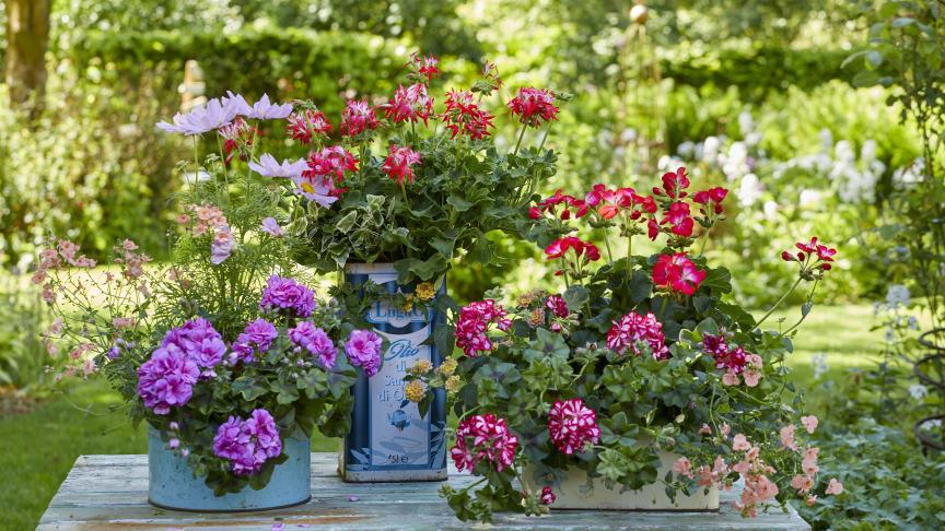 En trädgård är en perfekt plats att hitta balans och lugn i en orolig tid.