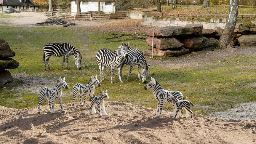 Tierischer Ferienspaß: PLAYMOBIL und der Tiergarten Nürnberg laden zum großen Zoo-Quiz ein