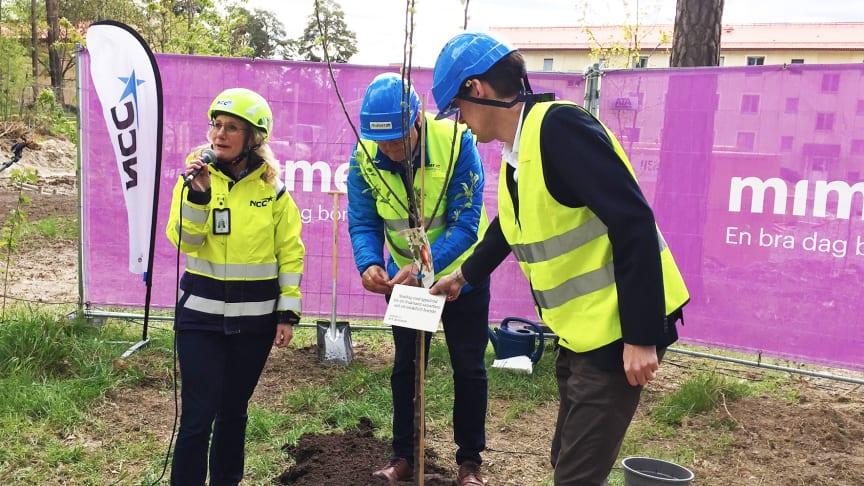 Jenny Gunnar, NCC och Mikael Källqvist samt Jesper Brandberg från Mimer planterar ett äppelträd för ett fruktsamt samarbete och smakfullt boende i kvarteret Älgen.