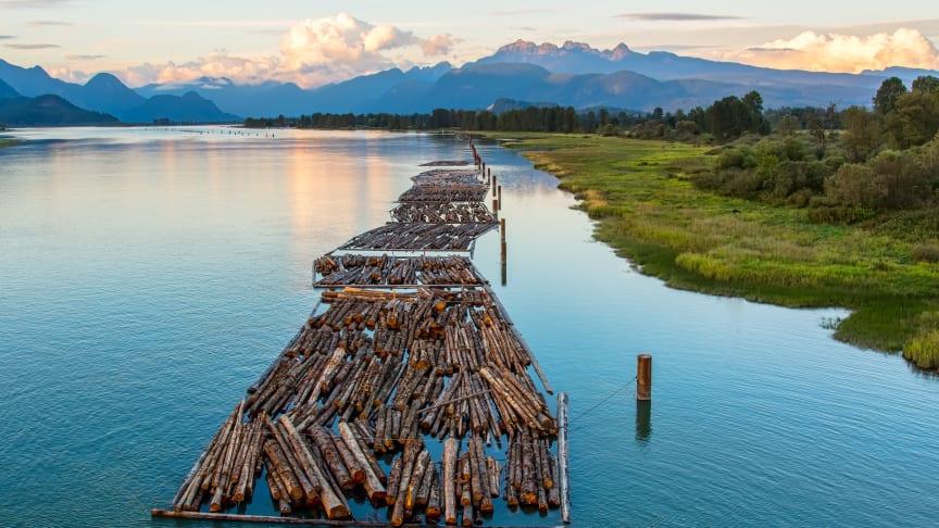 Banker och pensionsfonders investeringar kan bidra till hållbar användning av bland annat de stora barrskogsområdena i Kanada. Foto: James Wheeler/MostPhotos.