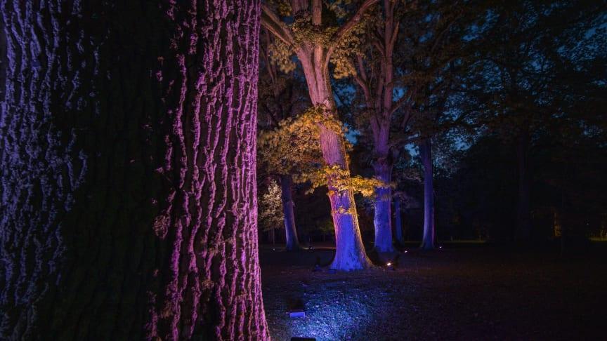 The Grove, Lights in Alingsås 2019. Foto Patrik Gunnar Helin