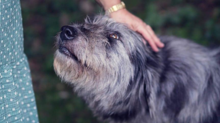 Hunde können das neuartige Coronavirus nicht auf Menschen übertragen. (Foto: Simone Dalmeri via Unsplash)