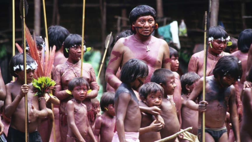 Yanomami stammen er en af de stammer, der angribes af kvægfarmere og andre indtrængere, og som nu også trues af coronavirus. Foto: Survival International
