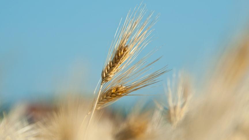 Fortsatt jordbruksanvändning - Revaq är rätt väg