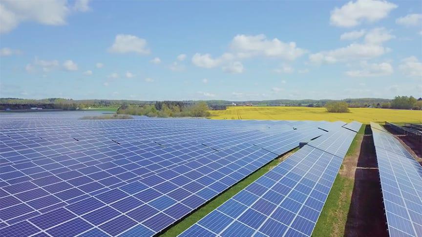 Med solenergi får Chr. Hansens naturlige ingredienser et endnu grønnere fodaftryk.