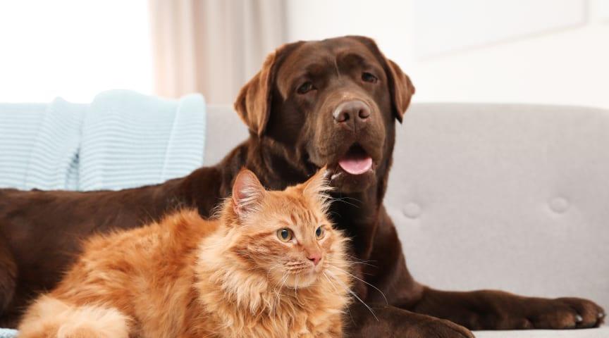 Veterinärbesöken ökar – Här är de 5 vanligaste hälsoproblemen hos hundar och katter