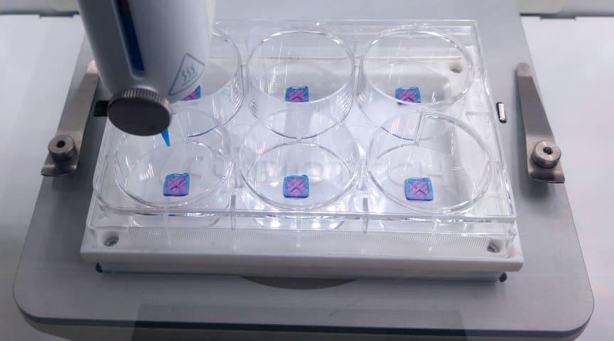 BASF och CTIBiotech utvecklar den första rekonstruktionen av människohud med makrofager med 3D-bioskrivningsteknologi.