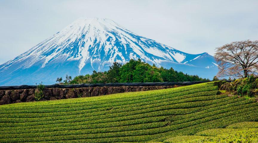 Upplev vin från Chianti Classico i Toscana och vulkanen Etna på Sicilien
